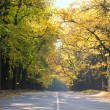 Road with autumn yellow leaves — Stock Photo