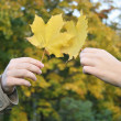 Couple hands with maple leaves — Stock Photo