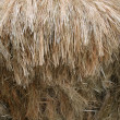 Thatch - Stock Photo