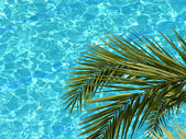 Palm and water pool — Stock Photo