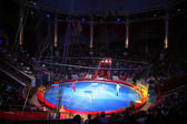 Tigres de circo — Foto de Stock