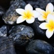 Foto Stock: Frangipani flowers and spstones