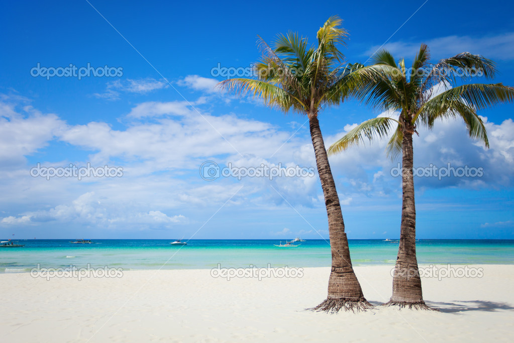 Perfect tropical white sand beach with palm trees  Stock Photo #3587081
