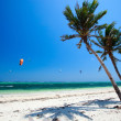 Tropical Paradise - Stockfoto