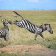 Royalty-Free Stock Photo: Zebras