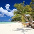 Tropical Paradise — Stock Photo #3645345