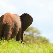 Stock Photo: Elephant