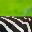 Zebra skin - Stock Photo