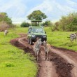 Stock Photo: Game drive