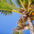 Palm tree closeup — Stockfoto