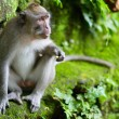 Stockfoto: Portrait of wild monkey
