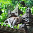 Details of temple in Ubud monkey forest — Stock Photo