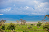 Landscape of Ngorongoro crater in Tanzania — Stock Photo