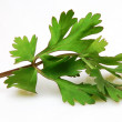 Parsley — Stock Photo #3012126