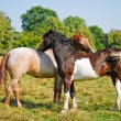 Stock Photo: Two Horses in Love