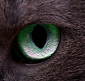 Cat's eye — Foto Stock