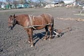 Horse with plow — Stock Photo