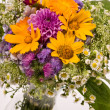 Flowers — Stock Photo #3085231