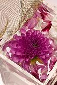 Lilac dahlia — Stock Photo