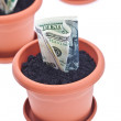 money growth — Stock Photo