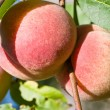 peach — Stock Photo #3717092