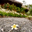 Beautiful flower on alley with bungalow - Stock Photo