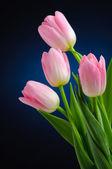 Tulipanes rosa. — Foto de Stock