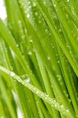 Zelená tráva. — Stock fotografie