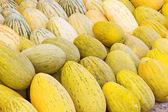 市場で熟した黄色のメロンの収穫 — ストック写真