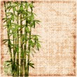 Shabby bamboo background — Stock Vector