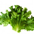 Fresh lettuce leaves isolated on white background — Stock Photo