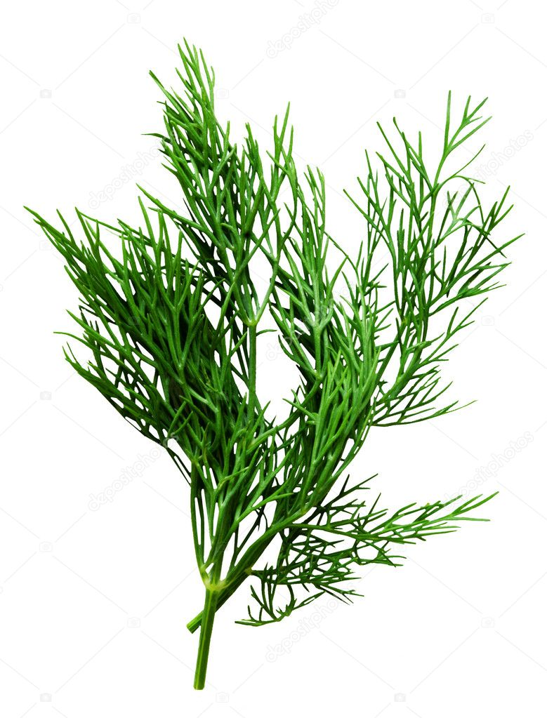 Fresh dill herb isolated on the white — Stock Photo ...