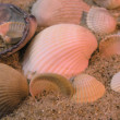 Seashells frame on sand background — Stock Photo