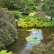Stock Photo: Small pond.