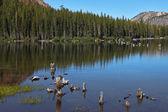 La foresta è riflesso nell'acqua — Foto Stock