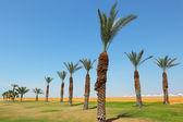 Playa desierta de un hotel de lujo — Foto de Stock