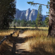 Lovely shady path in Yosemite Park — Stock Photo