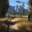Постер, плакат: Lovely shady path in Yosemite Park