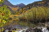Charming creek among the bushes — Stock Photo