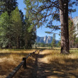 Lovely shady path in Yosemite — Stock Photo