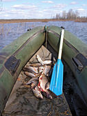 Fish in boat — Stock Photo