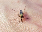 Midge on hand of the person — Photo