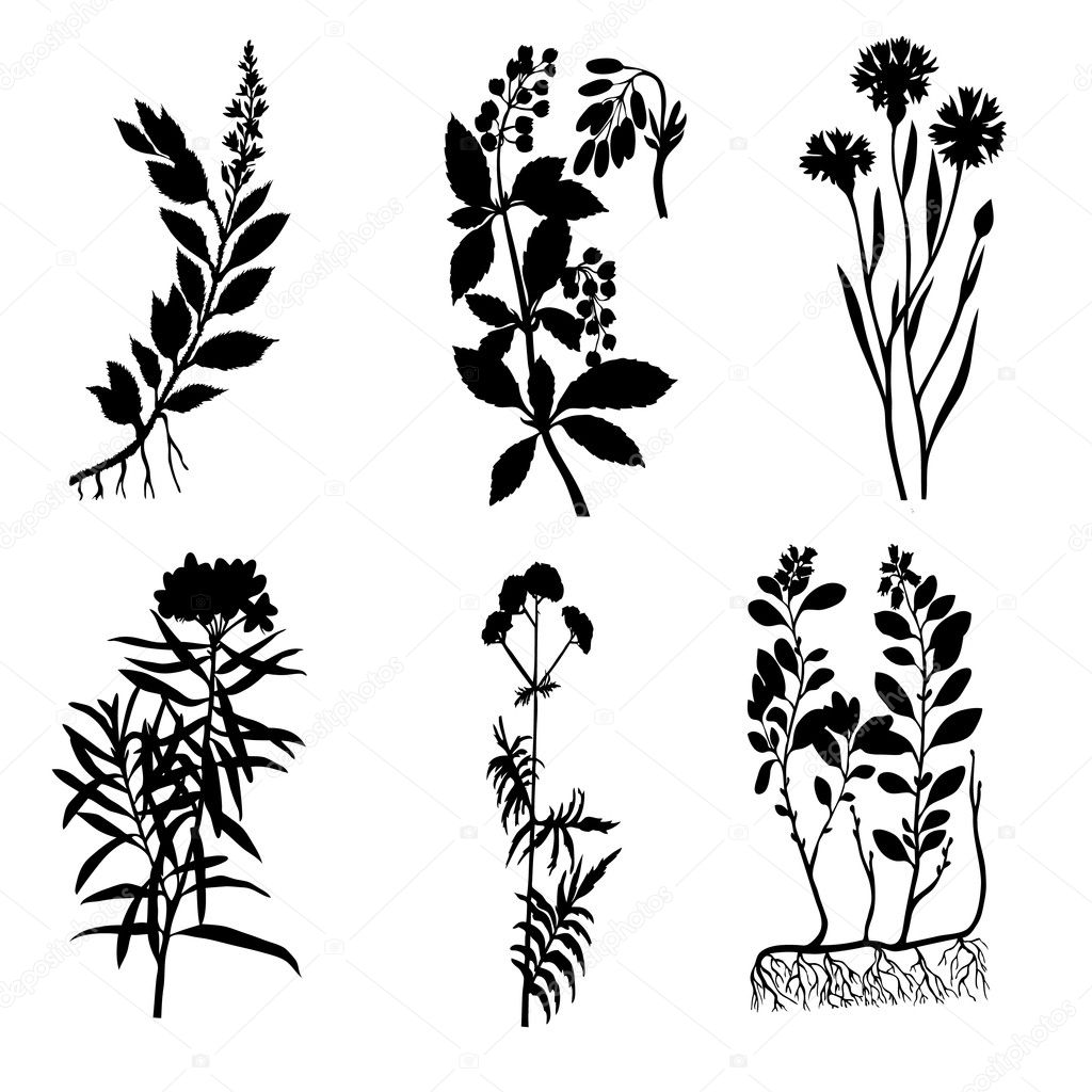 Vector silhouettes of the medicinal plants on white background — Stock Vector #3879721