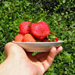 Hand stretches strawberries in plate — Stock Photo #3880034