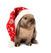 Rabbit in the New Year hat — Stock Photo