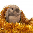 Dwarf rabbit in the Christmas tinsel. — Zdjęcie stockowe