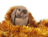 Dwarf rabbit in the Christmas tinsel. — Stock Photo