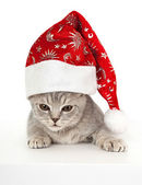 Kitten in Christmas hat. — Stock Photo