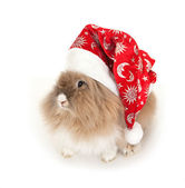 Lionhead rabbit in the New Year hat. — Stock Photo