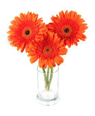 Three gerbera flowers in glass — Stock Photo